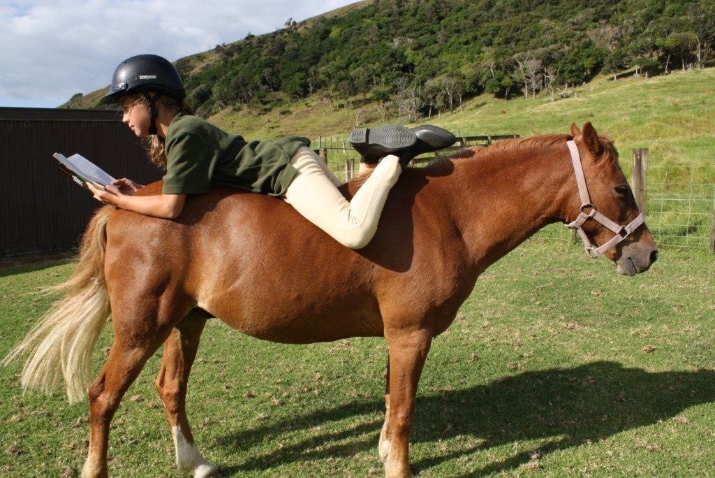 Summer-reading-horse